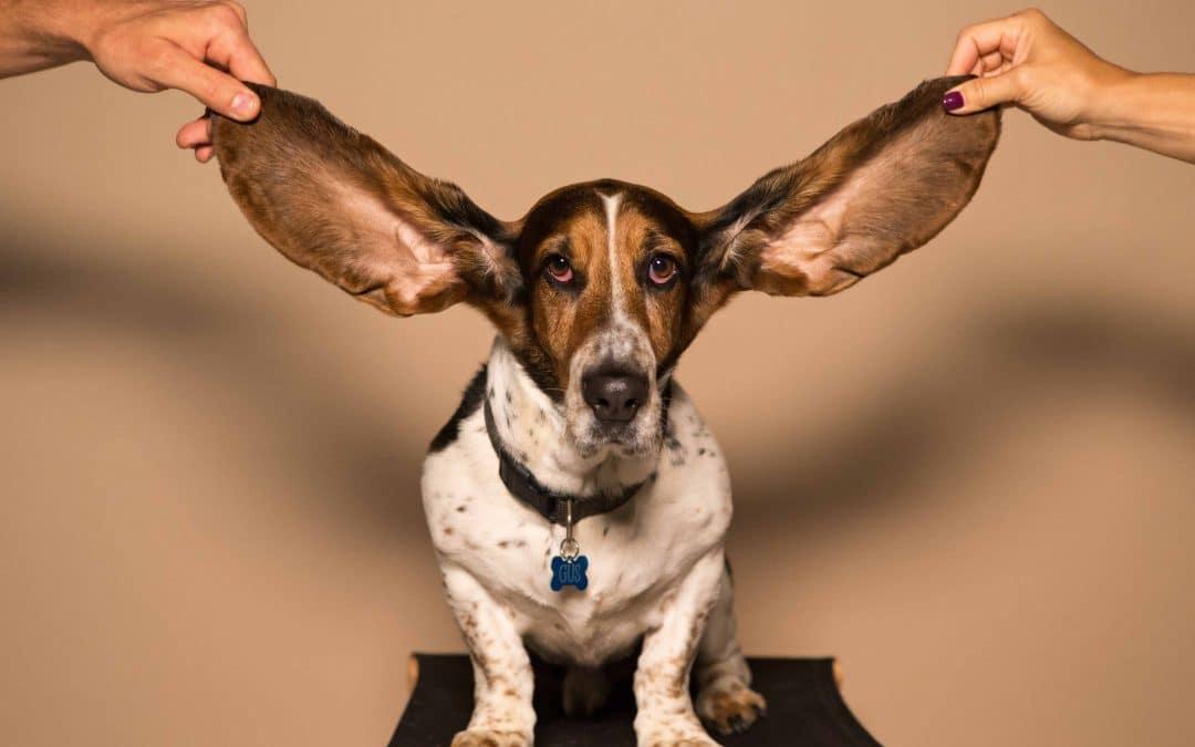 Ecoute active, entendre ne signifie pas écouter